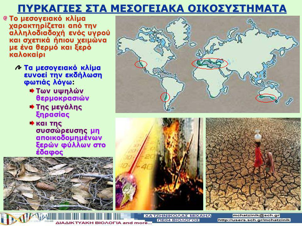 ΠΥΡΚΑΓΙΕΣ ΣΤΑ ΜΕΣΟΓΕΙΑΚΑ ΟΙΚΟΣΥΣΤΗΜΑΤΑ Το μεσογειακό κλίμα χαρακτηρίζεται από την αλληλοδιαδοχή ενός υγρού και σχετικά ήπιου χειμώνα με ένα θερμό και ξερό καλοκαίρι Τα μεσογειακό κλίμα ευνοεί την εκδήλωση φωτιάς λόγω Τα μεσογειακό κλίμα ευνοεί την εκδήλωση φωτιάς λόγω: Των υψηλών θερμοκρασιών Της μεγάλης ξηρασίας και της συσσώρευσης μη αποικοδομημένων ξερών φύλλων στο έδαφος