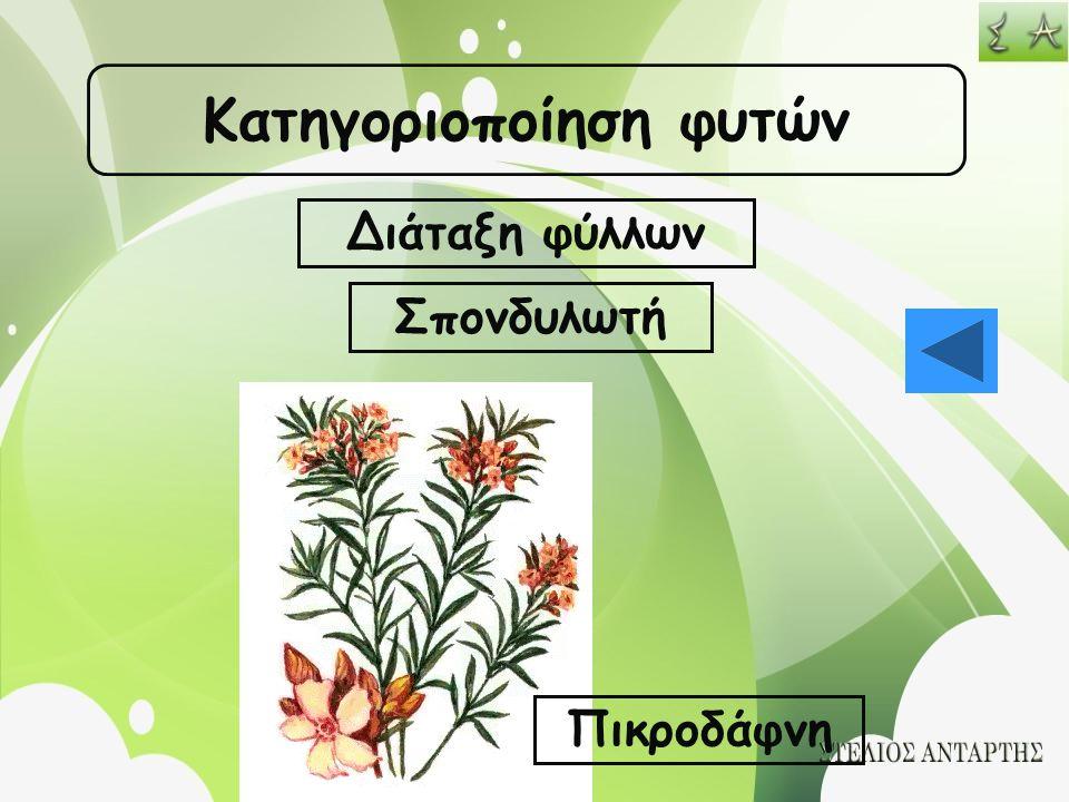 Κατηγοριοποίηση φυτών Διάταξη φύλλων Σπονδυλωτή Πικροδάφνη