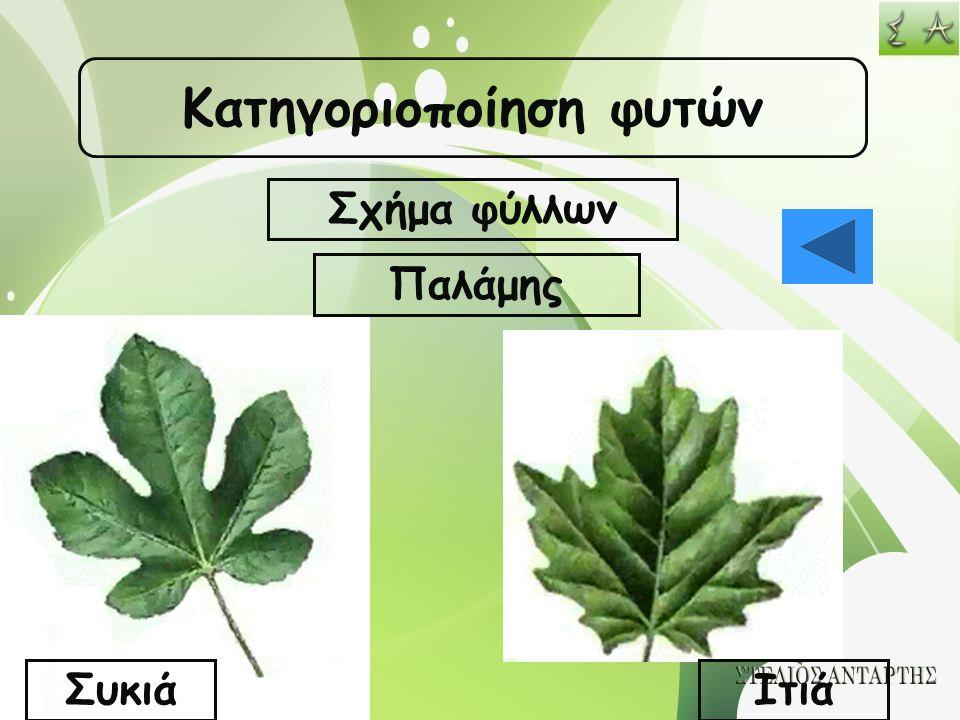 Κατηγοριοποίηση φυτών Σχήμα φύλλων ΣυκιάΙτιά Παλάμης