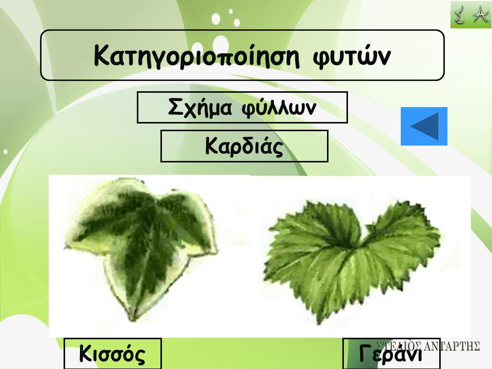 Κατηγοριοποίηση φυτών Σχήμα φύλλων Καρδιάς ΚισσόςΓεράνι