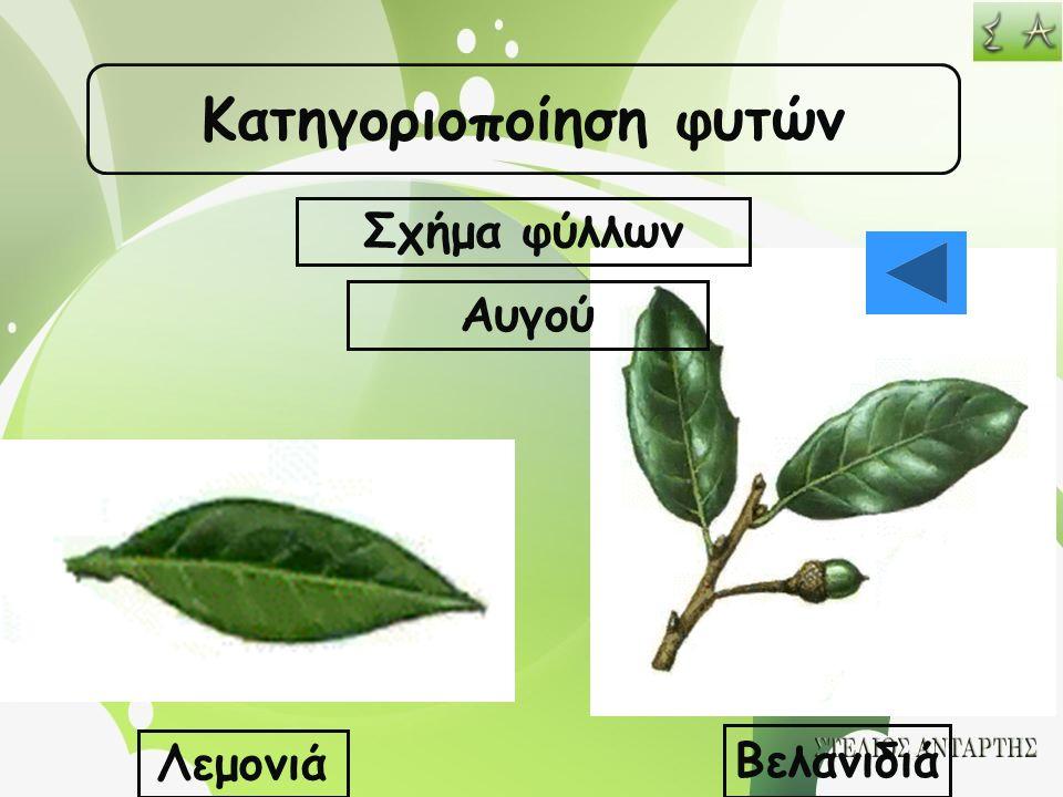Κατηγοριοποίηση φυτών Σχήμα φύλλων Αυγού Λεμονιά Βελανιδιά