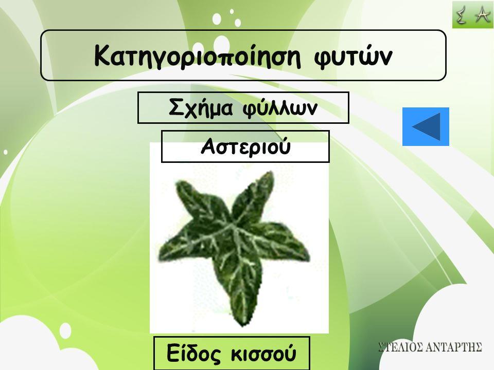 Κατηγοριοποίηση φυτών Σχήμα φύλλων Αστεριού Είδος κισσού