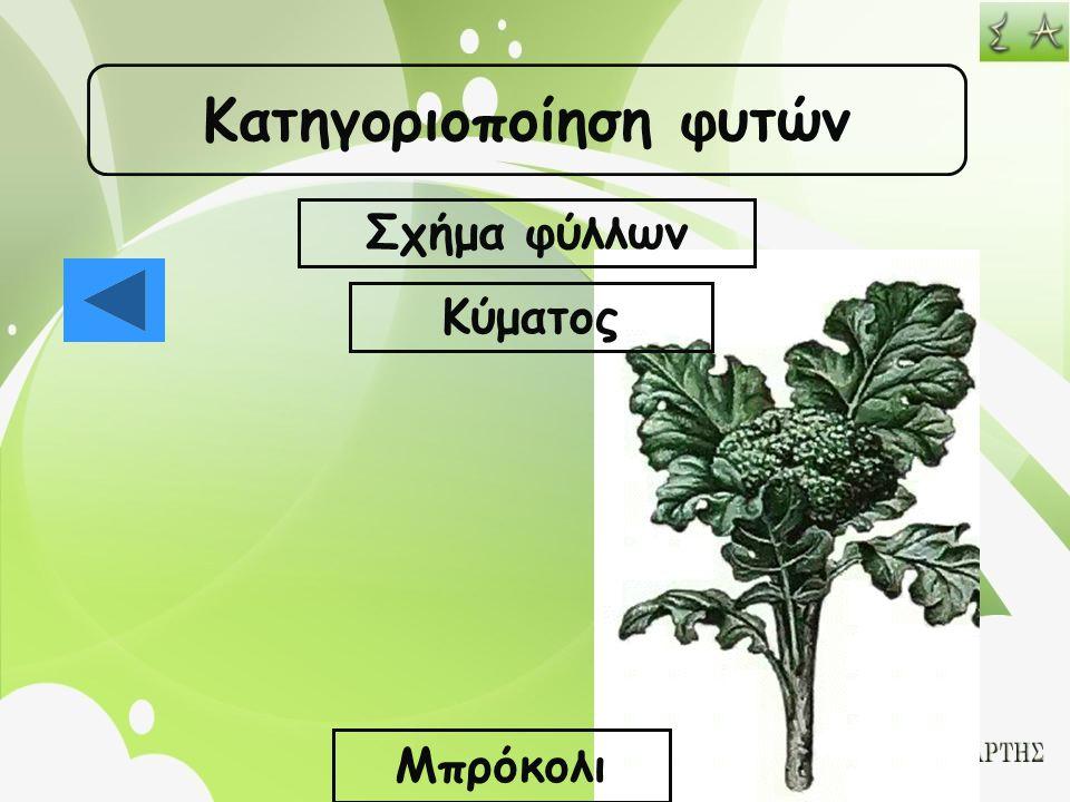 Κατηγοριοποίηση φυτών Σχήμα φύλλων Κύματος Μπρόκολι