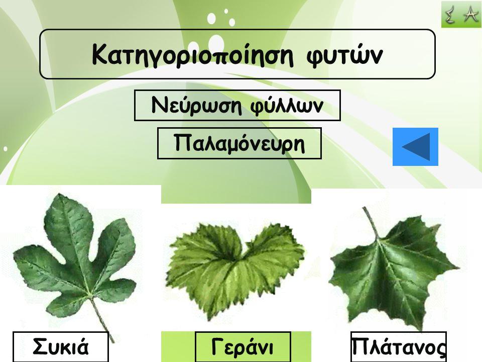 Κατηγοριοποίηση φυτών Νεύρωση φύλλων Παλαμόνευρη ΣυκιάΓεράνιΠλάτανος