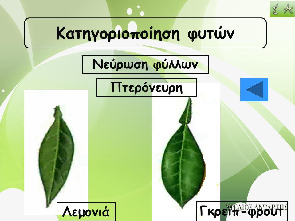 Κατηγοριοποίηση φυτών Νεύρωση φύλλων Πτερόνευρη Λεμονιά Γκρεϊπ-φρουτ