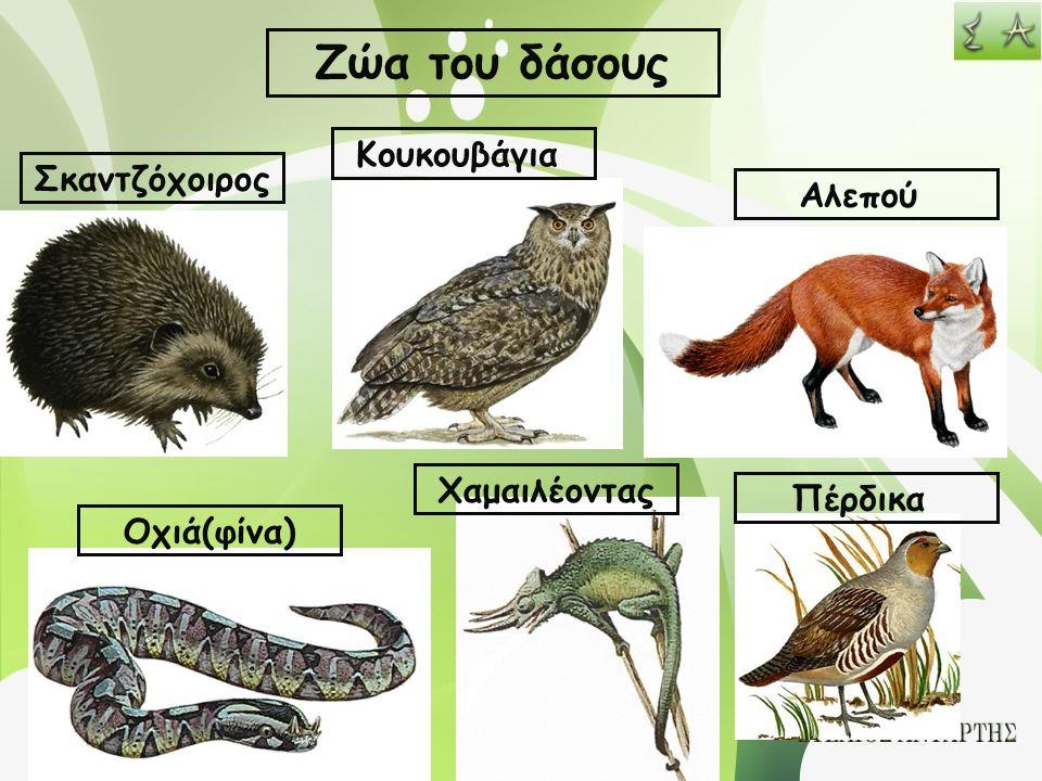 Ζώα του δάσους Σκαντζόχοιρος Κουκουβάγια Αλεπού Οχιά(φίνα) Χαμαιλέοντας Πέρδικα
