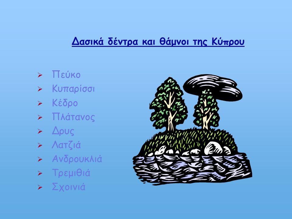 Τα δάση της Κύπρου Τα δάση της Κύπρου καλύπτουν το 19 % της έκτασης του νησιού δηλαδή 1754 Km². Από αυτά το 75 % βρίσκεται στις ελεύθερες περιοχές. Τα