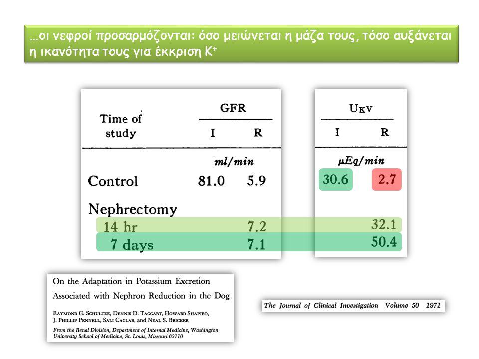 …οι νεφροί προσαρμόζονται: όσο μειώνεται η μάζα τους, τόσο αυξάνεται η ικανότητα τους για έκκριση Κ +