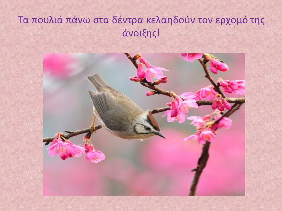 Τα πουλιά πάνω στα δέντρα κελαηδούν τον ερχομό της άνοιξης!