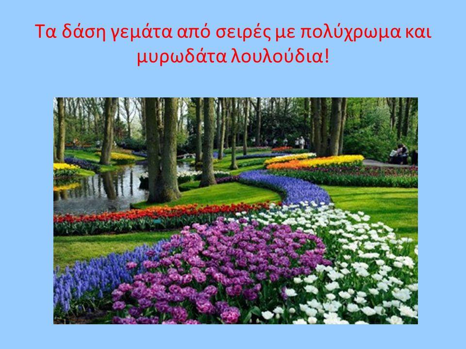 Τα δάση γεμάτα από σειρές με πολύχρωμα και μυρωδάτα λουλούδια!