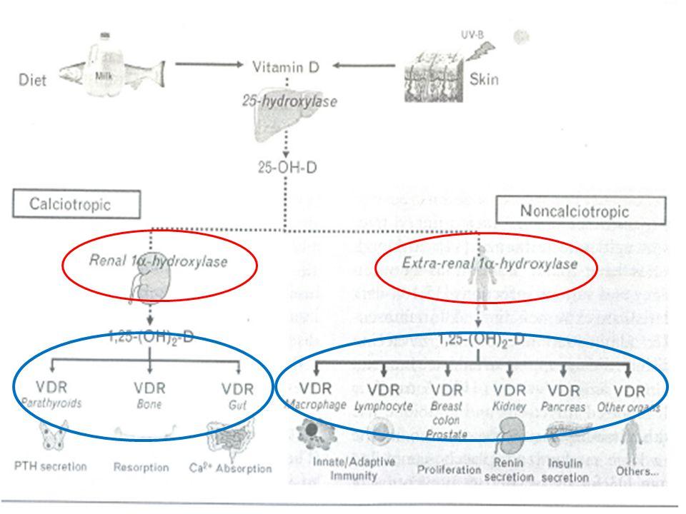 Νεφροί και βιταμίνη D 3