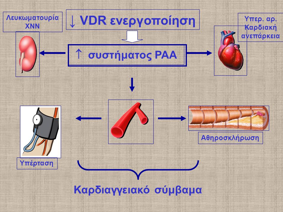 ↓ VDR ενεργοποίηση  συστήματος ΡΑΑ Υπέρταση Αθηροσκλήρωση Καρδιαγγειακό σύμβαμα Υπερ.