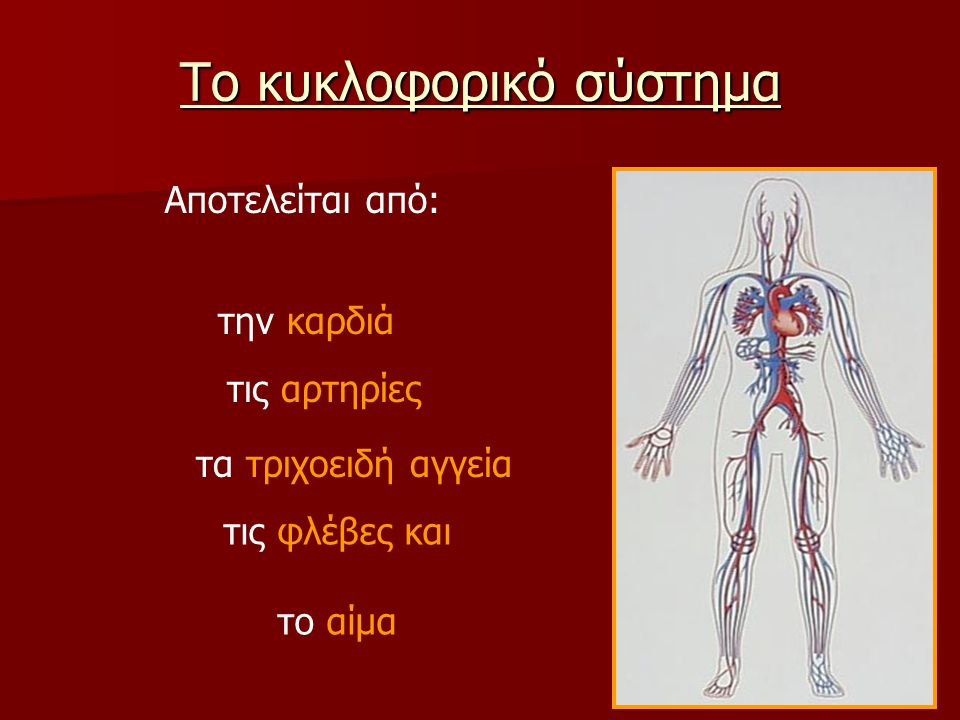 Το κυκλοφορικό σύστημα Αποτελείται από: την καρδιά τις αρτηρίες τα τριχοειδή αγγεία τις φλέβες και το αίμα