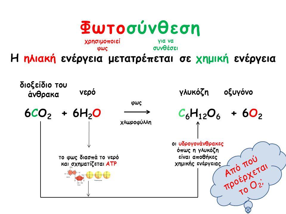 Φωτοσύνθεση Η ηλιακή ενέργεια μετατρέπεται σε χημική ενέργεια 6CO 2 + 6Η 2 Ο C 6 H 12 O 6 + 6O 2 χρησιμοποιεί φως για να συνθέσει διοξείδιο του άνθρακ