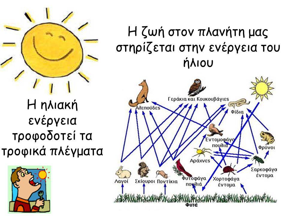 Η ζωή στον πλανήτη μας στηρίζεται στην ενέργεια του ήλιου Η ηλιακή ενέργεια τροφοδοτεί τα τροφικά πλέγματα