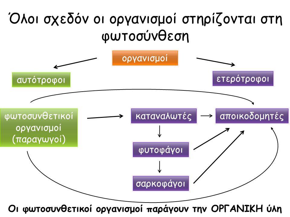 Όλοι σχεδόν οι οργανισμοί στηρίζονται στη φωτοσύνθεση οργανισμοί αυτότροφοι φυτοφάγοι φωτοσυνθετικοί οργανισμοί (παραγωγοί) ετερότροφοι αποικοδομητέςκ