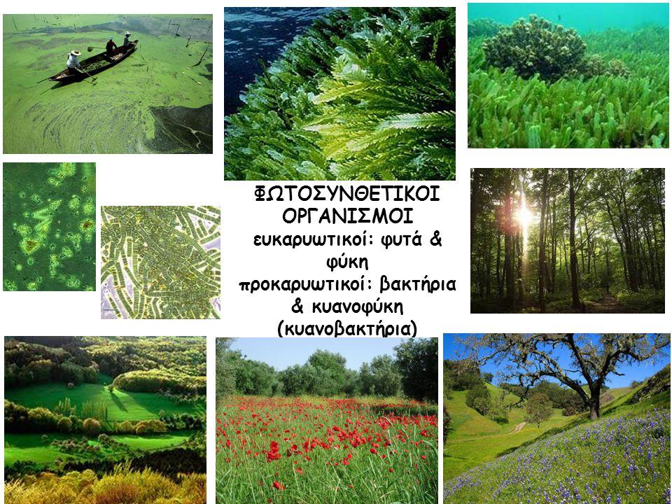 ΦΩΤΟΣΥΝΘΕΤΙΚΟΙ ΟΡΓΑΝΙΣΜΟΙ ευκαρυωτικοί: φυτά & φύκη προκαρυωτικοί: βακτήρια & κυανοφύκη (κυανοβακτήρια)