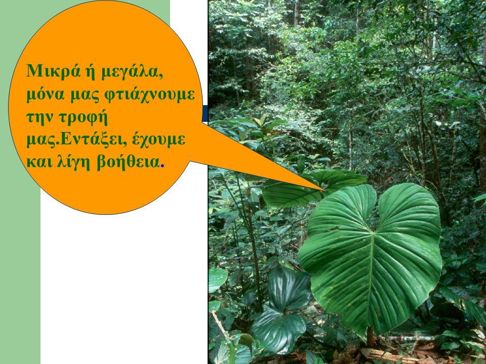 Πώς τρέφονται τα φυτά; Τα φυτά «παρασκευάζουν» μόνα τους.