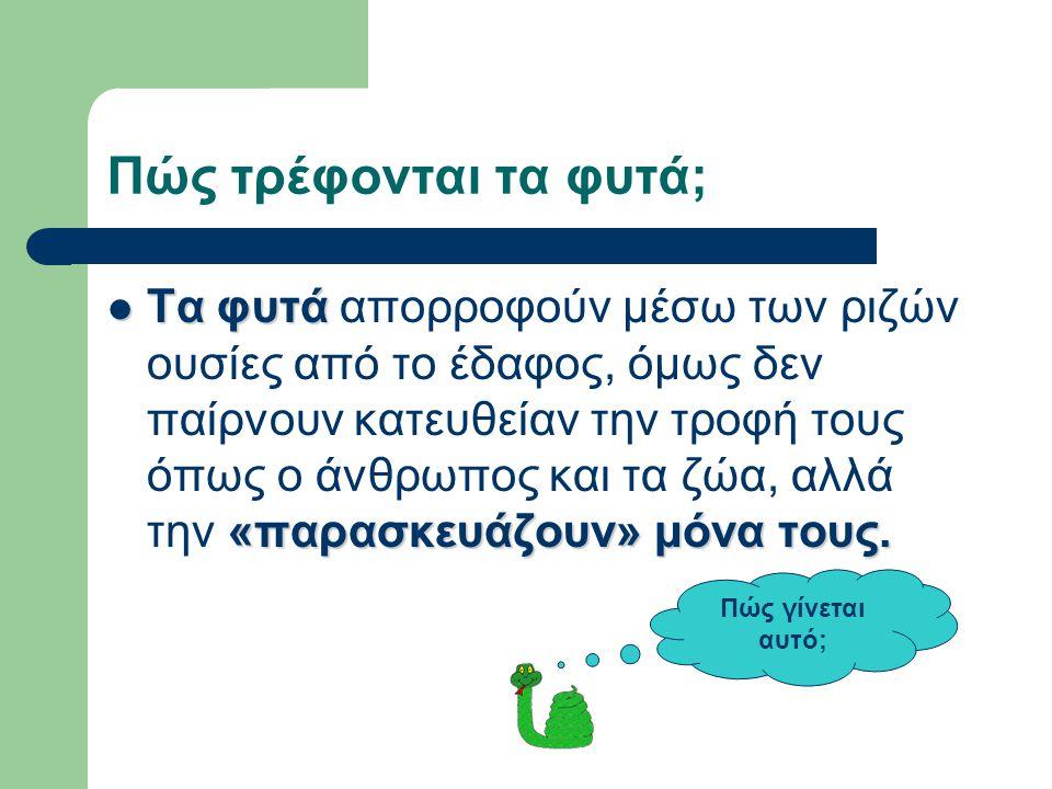 Ερωτήσεις Πώς «τρέφονται» τα φυτά; Πώς ονομάζουμε τη λειτουργία παρασκευής του αμύλου; Ποια στοιχεία είναι απαραίτητα για την παρασκευή του αμύλου; Ποιο αέριο απελευθερώνεται στο περιβάλλον κατά την φωτοσύνθεση;