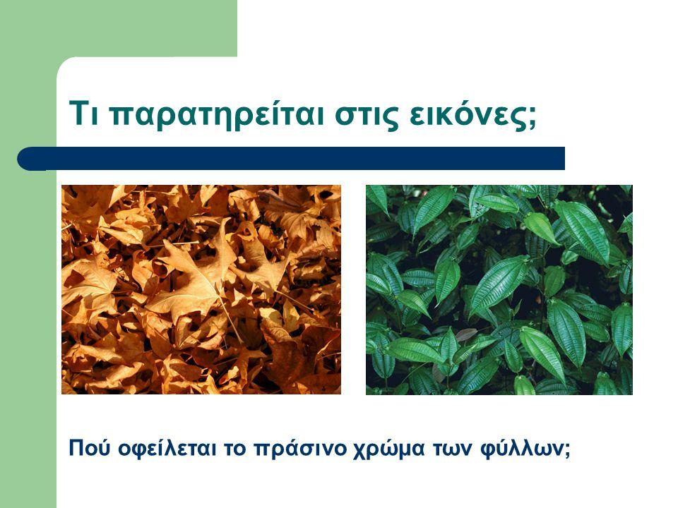 Χλωροφύλλη Η χλωροφύλλη είναι μια χρωστική ουσία που δίνει στα φύλλα το χαρακτηριστικό τους πράσινο χρώμα.