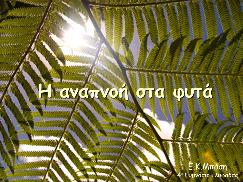 Η αναπνοή στα φυτά Ε.Κ.Μπάση 4 ο Γυμνάσιο Γλυφάδας