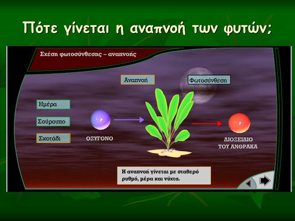 Πότε γίνεται η αναπνοή των φυτών;