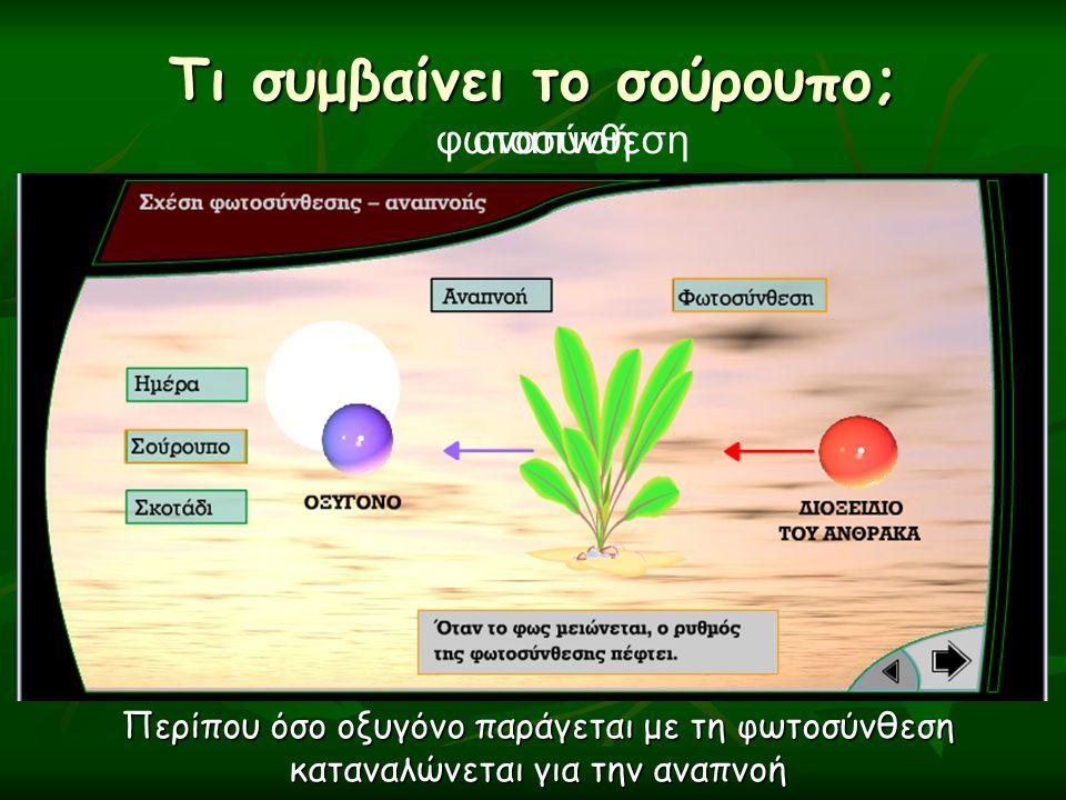Τι συμβαίνει το σούρουπο; αναπνοήφωτοσύνθεση Περίπου όσο οξυγόνο παράγεται με τη φωτοσύνθεση καταναλώνεται για την αναπνοή
