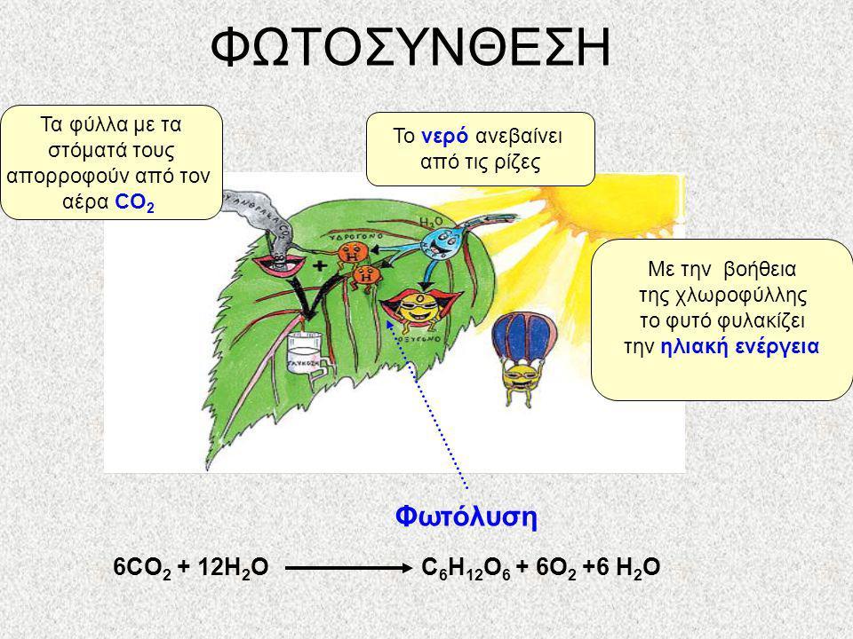 ΦΩΤΟΣΥΝΘΕΣΗ Πως φτιάχνουν τα φυτά την τροφή τους; Για να φτιάξουν την τροφή τους τα φυτά χρειάζονται 1.Ηλιακή ενέργεια 2.Νερό 3.Διοξείδιο του άνθρακα