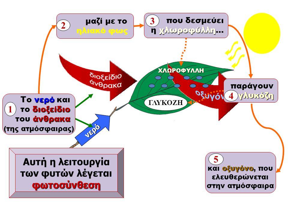 νερό Αυτή η λειτουργία των φυτών λέγεταιφωτοσύνθεση νερό Το νερό και διοξείδιο το διοξείδιο άνθρακα του άνθρακα (της ατμόσφαιρας) 1 παράγουνγλυκόζη 4