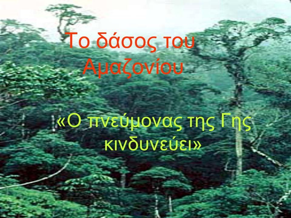 Το δάσος του Αμαζονίου «Ο πνεύμονας της Γης κινδυνεύει»