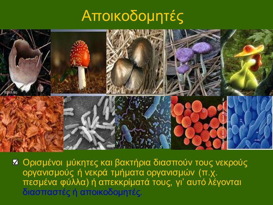 Αποικοδομητές Ορισμένοι μύκητες και βακτήρια διασπούν τους νεκρούς οργανισμούς ή νεκρά τμήματα οργανισμών (π.χ. πεσμένα φύλλα) ή απεκκρίματά τους, γι'