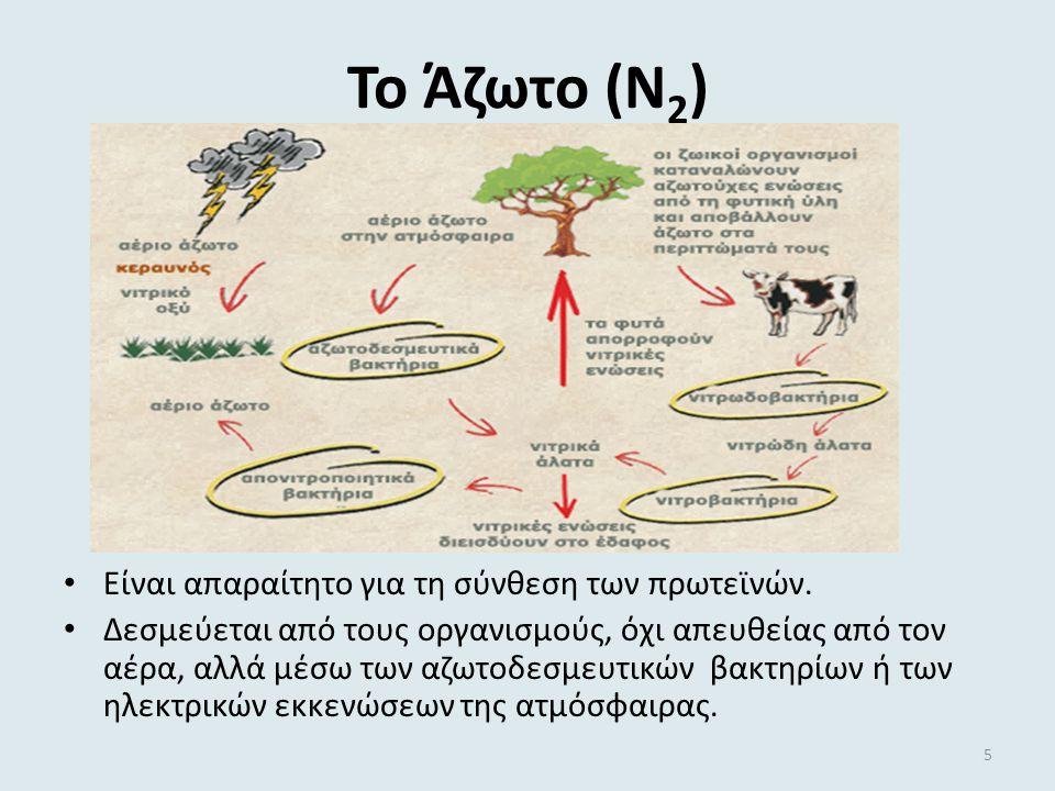 Το Άζωτο (Ν 2 ) Είναι απαραίτητο για τη σύνθεση των πρωτεϊνών.