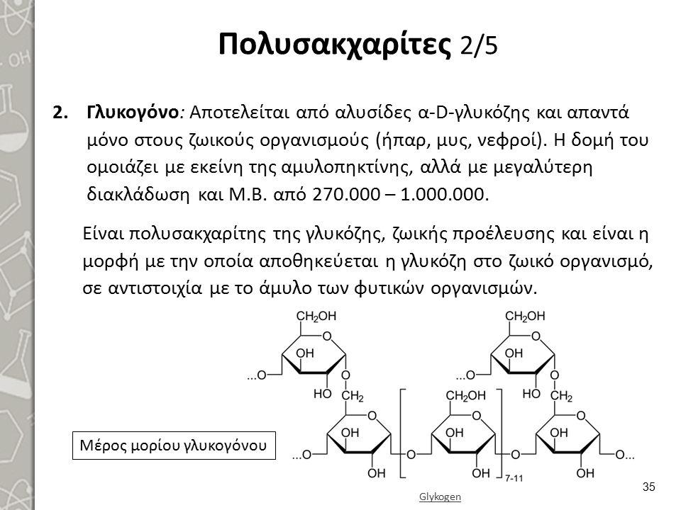 Πολυσακχαρίτες 2/5 2.Γλυκογόνο: Αποτελείται από αλυσίδες α-D-γλυκόζης και απαντά μόνο στους ζωικούς οργανισμούς (ήπαρ, μυς, νεφροί). Η δομή του ομοιάζ