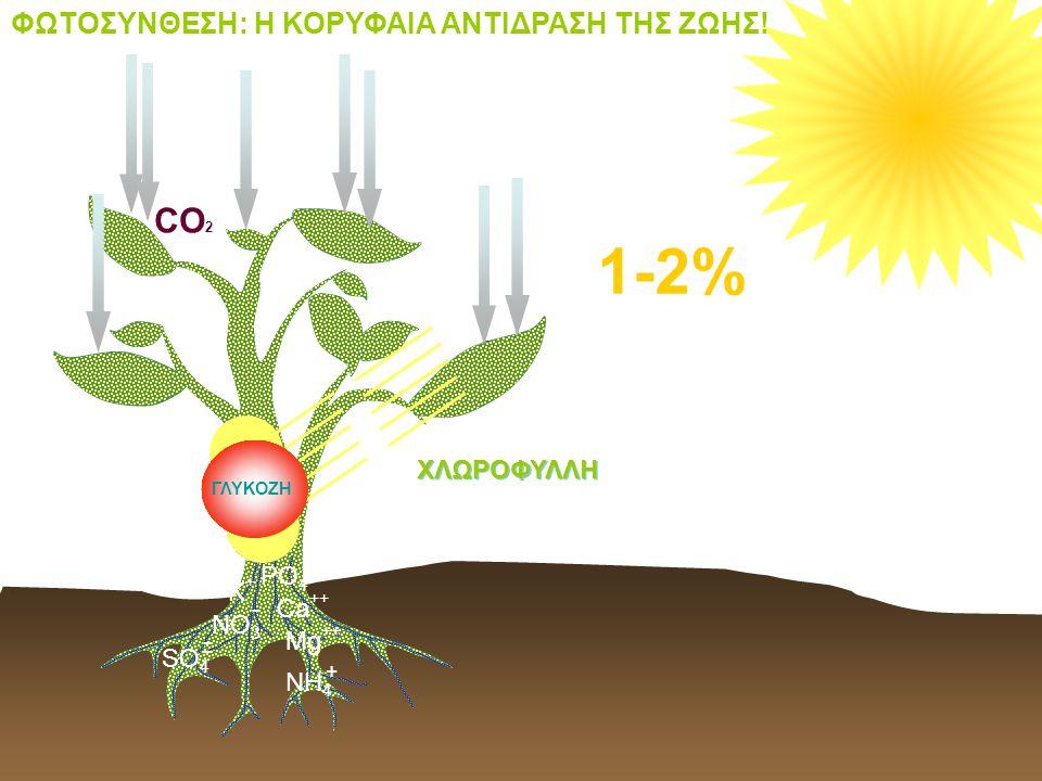 H2OH2O H2OH2O H2OH2O CO 2 ΓΛΥΚΟΖΗ Κ+Κ+ - ΝΟ 3 Ca ++ SO 4 - - Mg ++ PO 4 Ξ + NH 4 1-2% ΦΩΤΟΣΥΝΘΕΣΗ: Η ΚΟΡΥΦΑΙΑ ΑΝΤΙΔΡΑΣΗ ΤΗΣ ΖΩΗΣ! ΧΛΩΡΟΦΥΛΛΗ
