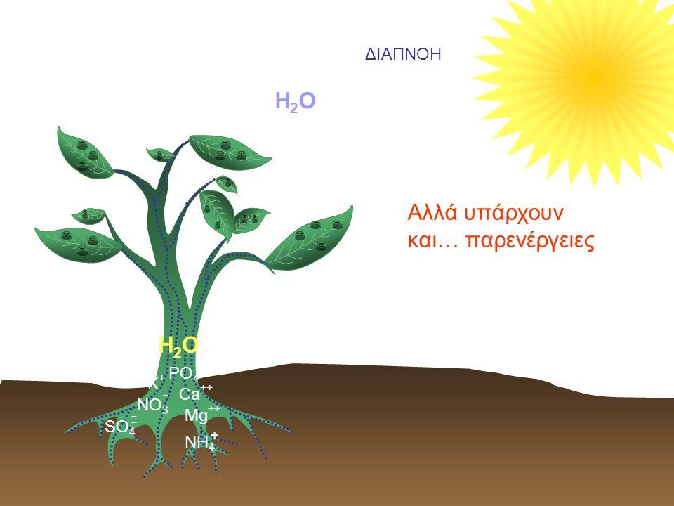 H2OH2O Αλλά υπάρχουν και… παρενέργειες ΔΙΑΠΝΟΗ Κ+Κ+ - ΝΟ 3 Ca ++ SO 4 - - Mg ++ PO 4 Ξ + NH 4 H2OH2O
