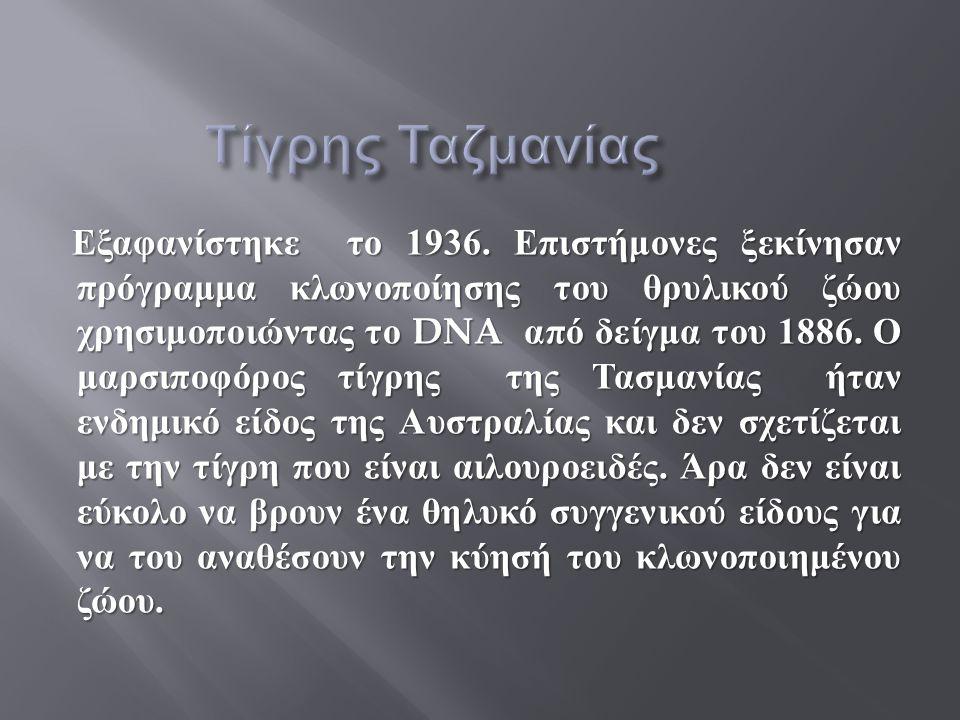 Εξαφανίστηκε το 1936. Επιστήμονες ξεκίνησαν πρόγραμμα κλωνοποίησης του θρυλικού ζώου χρησιμοποιώντας το DNA από δείγμα του 1886. Ο μαρσιποφόρος τίγρης