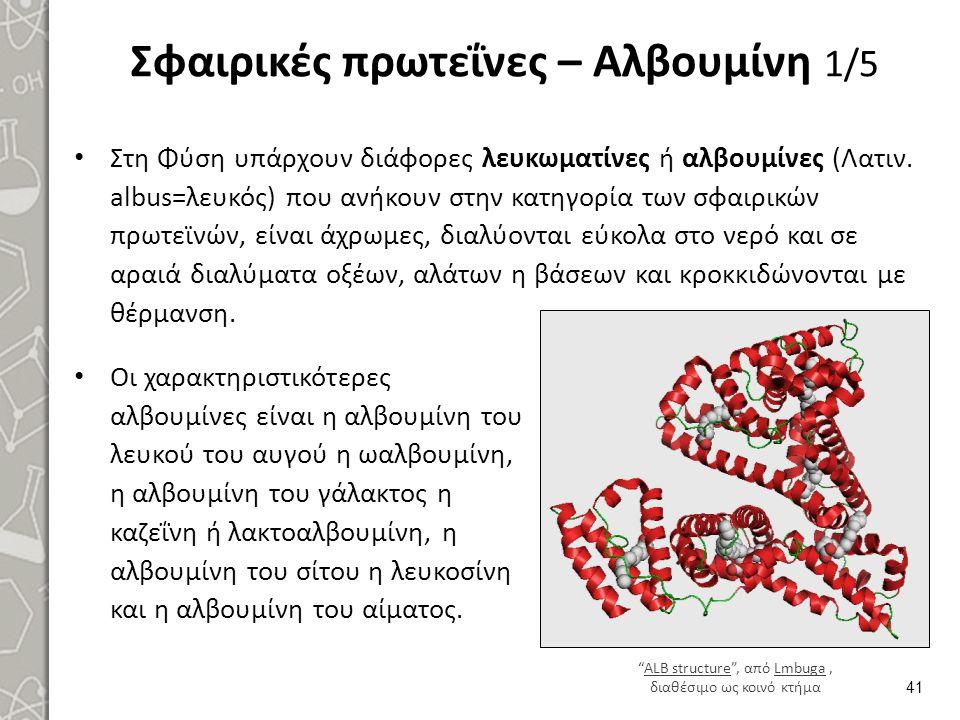 Σφαιρικές πρωτεΐνες – Αλβουμίνη 1/5 Στη Φύση υπάρχουν διάφορες λευκωματίνες ή αλβουμίνες (Λατιν. albus=λευκός) που ανήκουν στην κατηγορία των σφαιρικώ