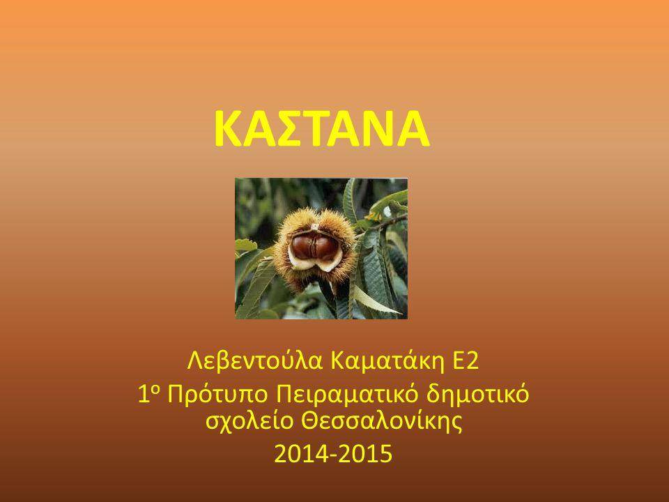 ΚΑΣΤΑΝΑ Λεβεντούλα Καματάκη Ε2 1 ο Πρότυπο Πειραματικό δημοτικό σχολείο Θεσσαλονίκης 2014-2015