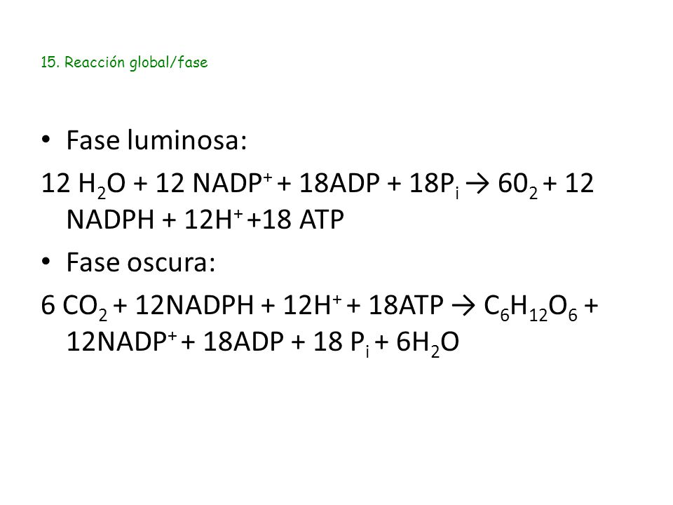 15. Reacción global/fase Fase luminosa: 12 H 2 O + 12 NADP + + 18ADP + 18P i → 60 2 + 12 NADPH + 12H + +18 ATP Fase oscura: 6 CO 2 + 12NADPH + 12H + +