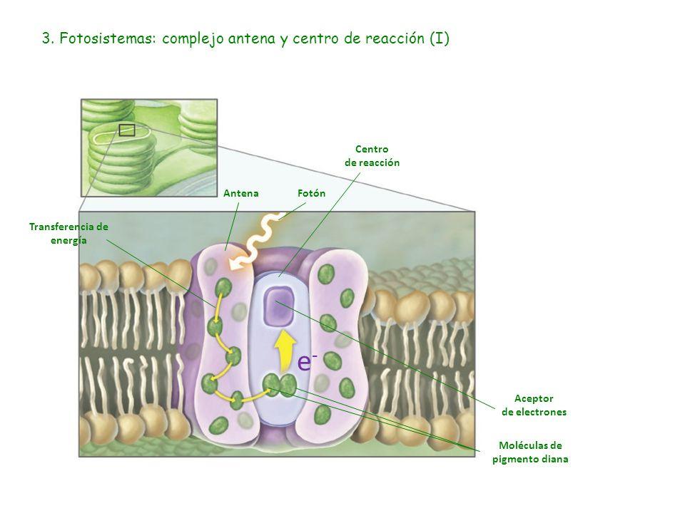 4. Fotosistemas: complejo antena y centro de reacción (II)