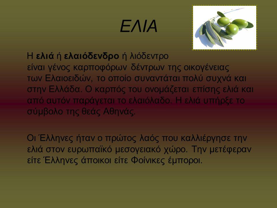 ΕΛΙΑ Η ελιά ή ελαιόδενδρο ή λιόδεντρο είναι γένος καρποφόρων δέντρων της οικογένειας των Ελαιοειδών, το οποίο συναντάται πολύ συχνά και στην Ελλάδα. Ο