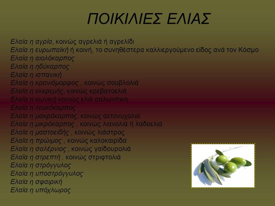 ΕΚΠΑΙΔΕΥΣΗ Μουσεία ελιάς και λαδιού υπάρχουν σε πολλές ελαιοπαραγωγικές περιοχές της Μεσογείου.