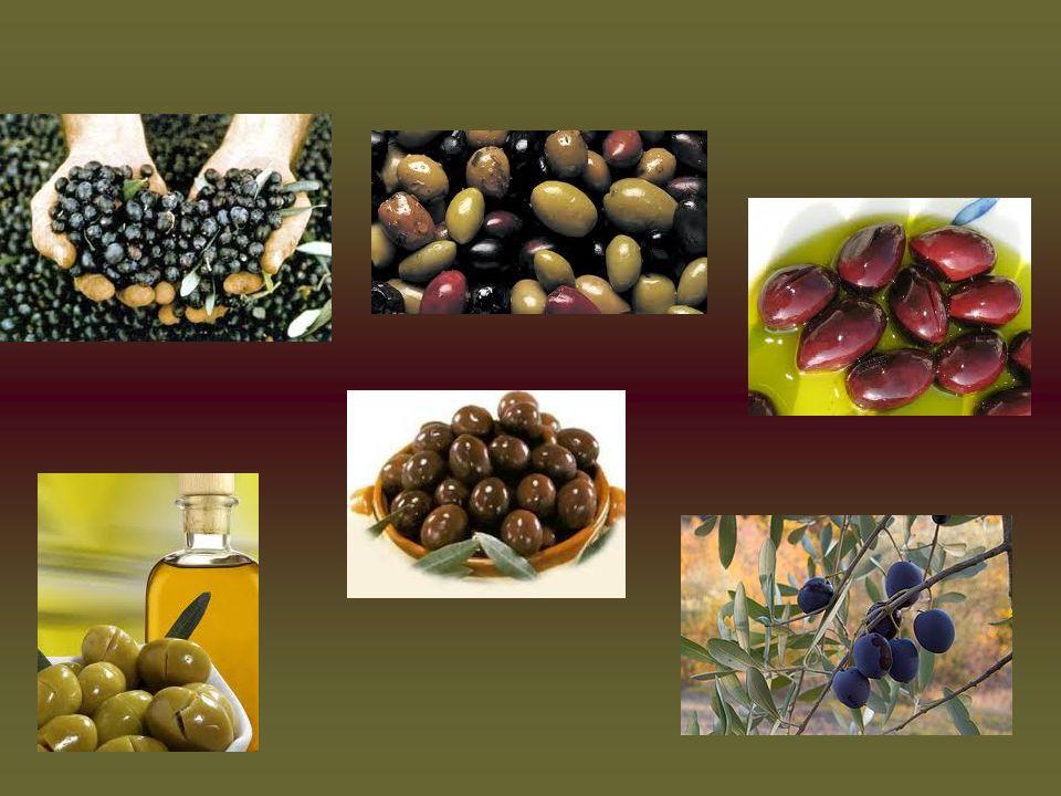 ΑΓΡΟΤΟΥΡΙΣΜΟΣ Πληθώρα τουριστικών θέρετρων τα οποία αξιολογούν τις γνώσεις τους για την συγκομιδή, ιστορία και εξέλιξη της ελιάς.