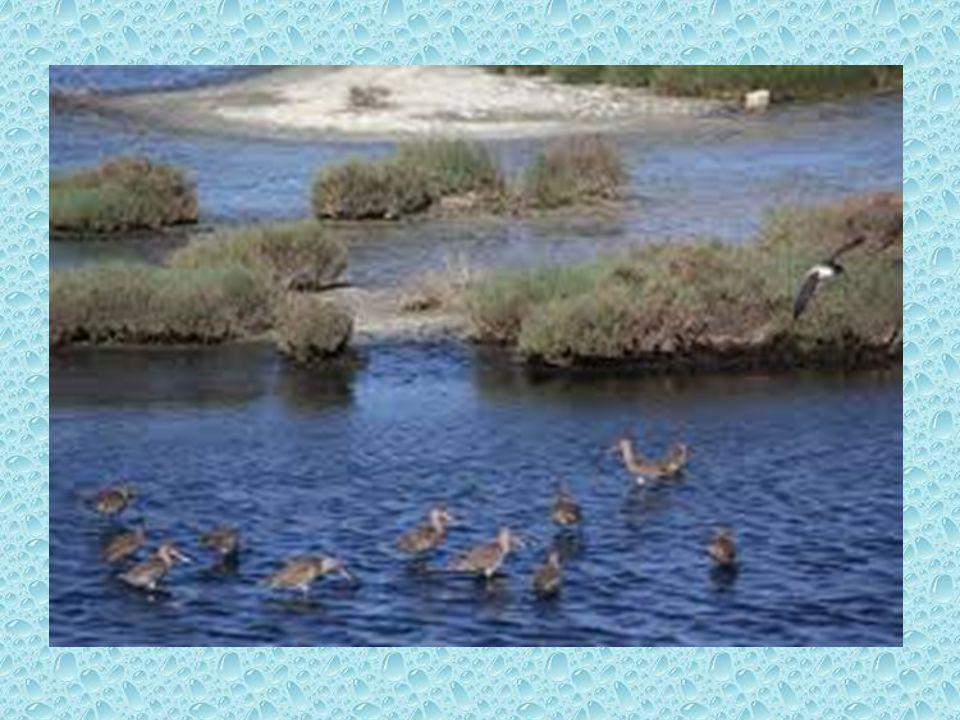 Τι είναι υδροβιότοπος Υδροβιότοποι, κατά το άρθρο 1(1) της σύμβασης Ραμσάρ, …είναι εκτάσεις καλυπτόμενες φυσικά ή τεχνητά, μόνιμα ή εποχιακά από στάσιμα ή ρέοντα γλυκά, υφάλμυρα ή αλμυρά νερά, συμπεριλαμβανομένων και των εκτάσεων που καλύπτονται από θαλάσσιο νερό, του οποίου το βάθος δεν υπερβαίνει τα 6 μέτρα κατά την άμπωτη .