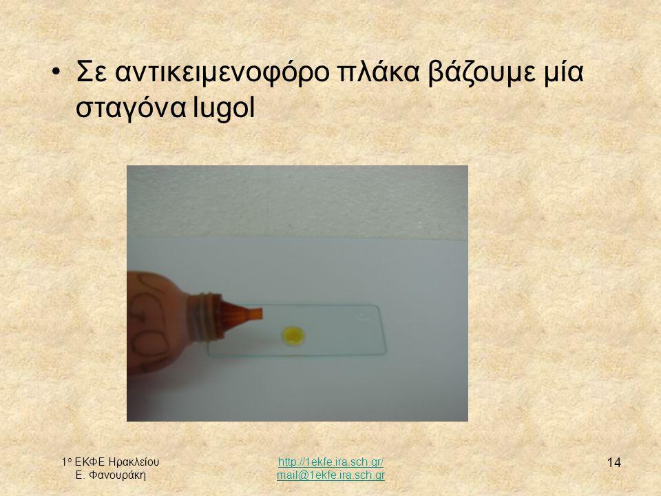 1 ο ΕΚΦΕ Ηρακλείου Ε. Φανουράκη http://1ekfe.ira.sch.gr/ mail@1ekfe.ira.sch.gr 14 Σε αντικειμενοφόρο πλάκα βάζουμε μία σταγόνα lugol
