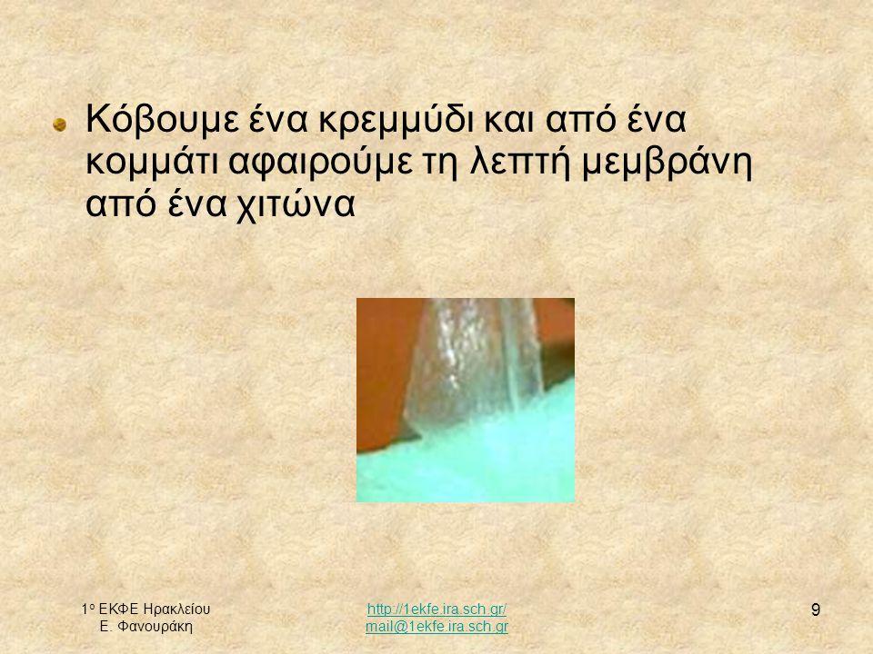 1 ο ΕΚΦΕ Ηρακλείου Ε. Φανουράκη http://1ekfe.ira.sch.gr/ mail@1ekfe.ira.sch.gr 9 Κόβουμε ένα κρεμμύδι και από ένα κομμάτι αφαιρούμε τη λεπτή μεμβράνη