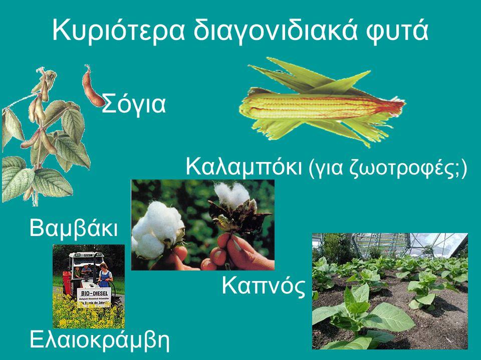 Κυριότερα διαγονιδιακά φυτά Σόγια Καλαμπόκι (για ζωοτροφές;) Βαμβάκι Καπνός Ελαιοκράμβη
