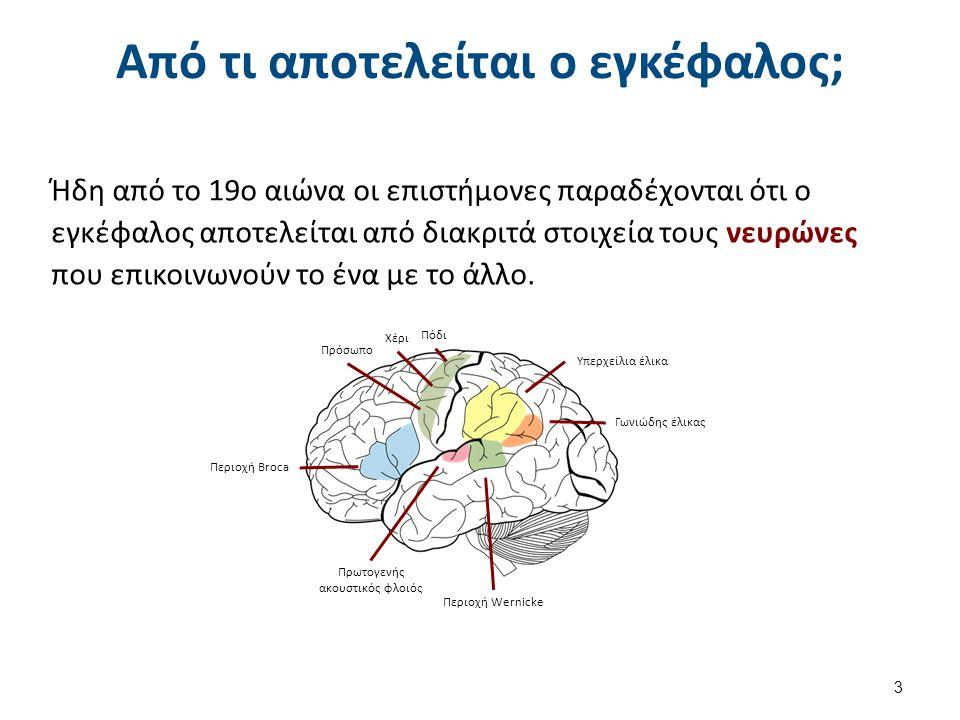 Από τι αποτελείται ο εγκέφαλος; Ήδη από το 19ο αιώνα οι επιστήμονες παραδέχονται ότι ο εγκέφαλος αποτελείται από διακριτά στοιχεία τους νευρώνες που ε