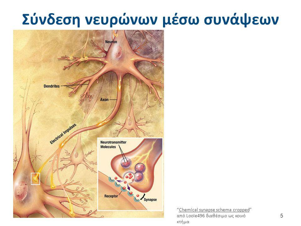 """Σύνδεση νευρώνων μέσω συνάψεων 5 """"Chemical synapse schema cropped"""" από Looie496 διαθέσιμο ως κοινό κτήμαChemical synapse schema cropped available unde"""