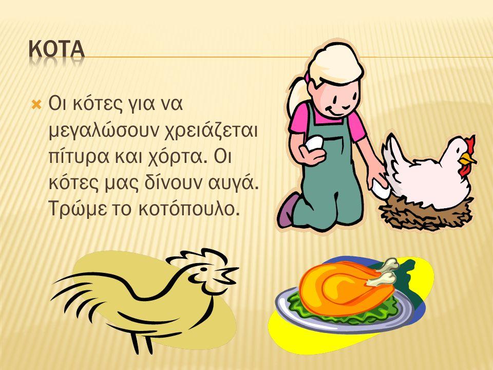 Η αγελάδα για να μεγαλώσει χρειάζεται χόρτα, πίτυρα. Από αυτήν παίρνουμε το γάλα, το κρέας της. Από το γάλα της φτιάχνουμε το γιαούρτι και το τυρί.
